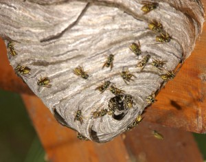 We Are Experts In Wasp Removal North London Pest Control