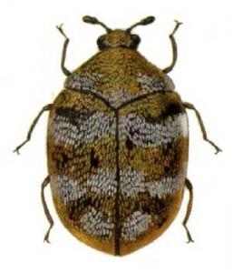 Bed Bugs Islington